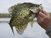 Grand Lake Crappie Fishing