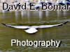 David E. Bomar Photography
