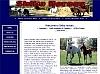 Shiko Horses - Arabian,Paint,Quarab